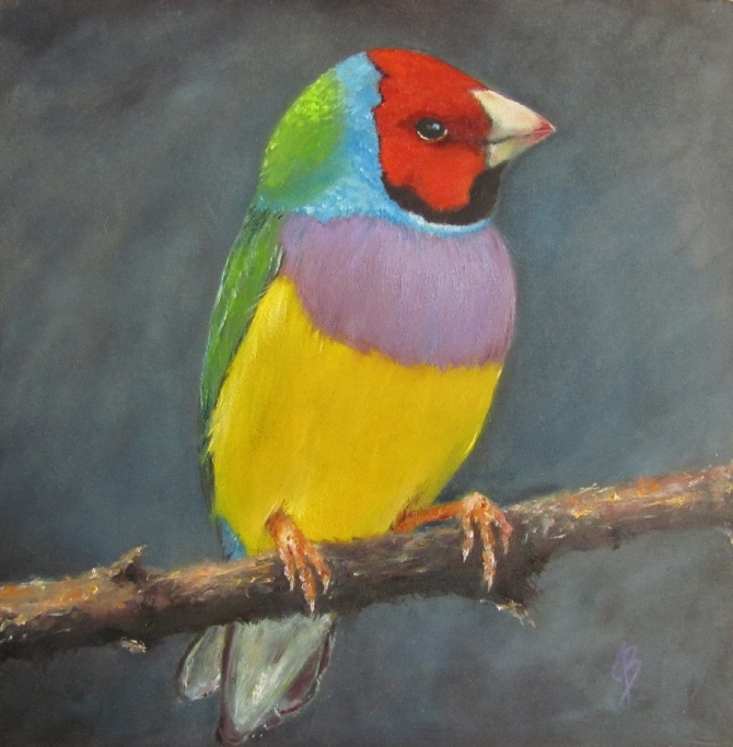 """After the Storm"" Lady Gould's Finch, the Gouldian Finch. Oil painting by Joyce Brandon"