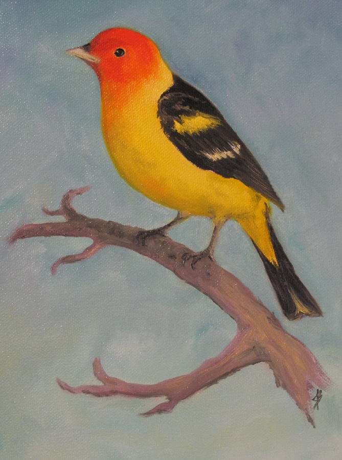 Western Tanager - oil painting on canvas.