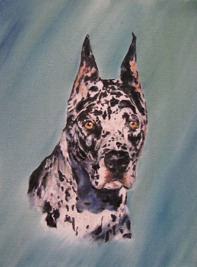 oil portrait of a great dane merle harlequin canine dog oil painting portraits