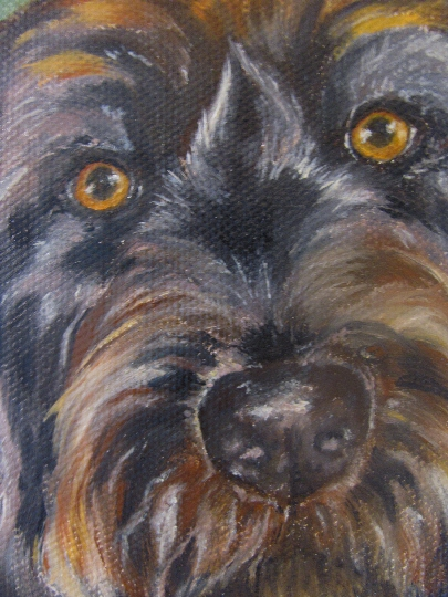 close up of canine portrait
