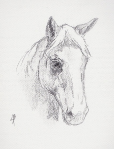 graphite sketch of a horse for client approval